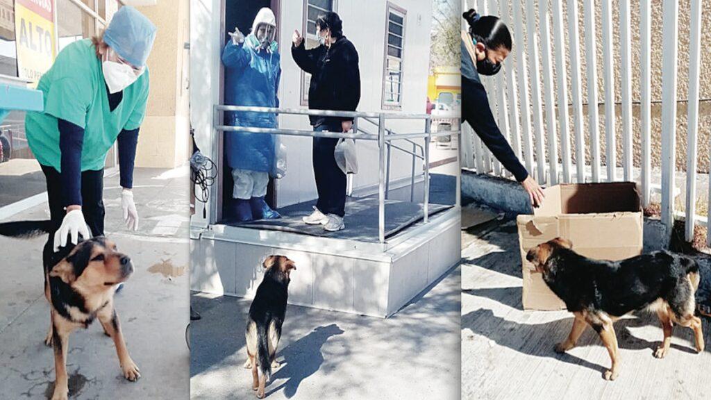 'Covito', el perro que espera a su amo fallecido en el Hospital General