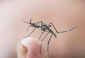 Dengue cerró con 184 casos el 2020