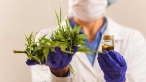 La marihuana fue eliminada por la OMS de la lista de drogas peligrosas