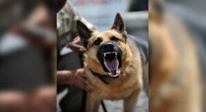 Joven de 14 años muere por ataque de perro pastor alemán
