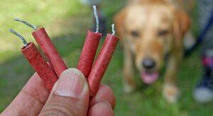 Perros y gatos son más susceptibles al estallido de cohetes; pueden morir por un paro