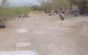 Se olvidan de recoger basura en Los Sánchez