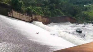 Jardinero arriesga su vida para rescatar a un perrito arrastrado por el agua (VIDEO)