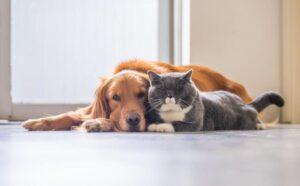 Exceso de sanitizantes podrían afectar a tus mascotas