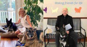Major y Champ: Vuelven perritos a habitar la Casa Blanca