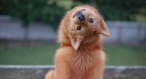 "VIDEO: Perro que gira la cabeza ""como el exorcista"" se vuelve viral"