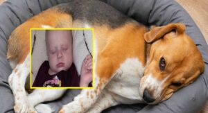 ¡TRAGEDÍA! Bebé muere aplastada por perro de su familia