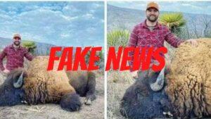 Cacería de bisonte en Coahuila es FAKE; confirman autoridades