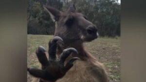 Jauría mata a 2 canguros en Parque La Pastora