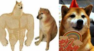 Cheems, el famoso perrito de los memes cumplió 10 años