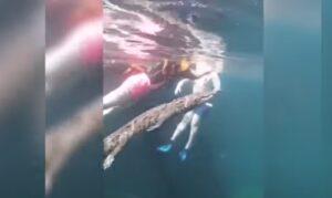 VIDEO: turistas se topan con enorme cocodrilo en un cenote de Tulum