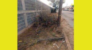 """Tumban árboles y dejan acera """"pelona""""; vecinos se molestan por la tala"""