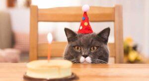 La fiesta de cumpleaños de un gato dejó 15 personas con COVID-19