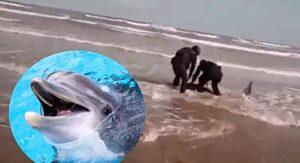 VIDEO Policías rescatan a DELFÍN VARADO en playas de Matamoros