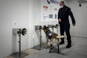 Francia utiliza perro para detectar Covid a través del sudor