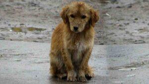 Frío y lluvia este fin de semana en Nuevo Laredo: proteja a sus mascotas