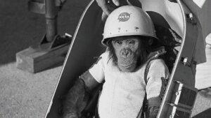 Ham; a 60 años de haber sido el primer chimpancé en llegar al espacio