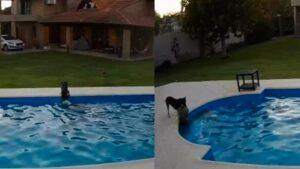 Perrita rescata del peligro de ahogarse a su compañera casi ciega -video-