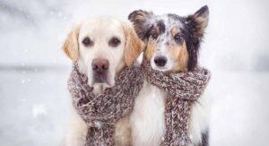 ¿Cuánto frío aguanta un perrito afuera de tu casa?