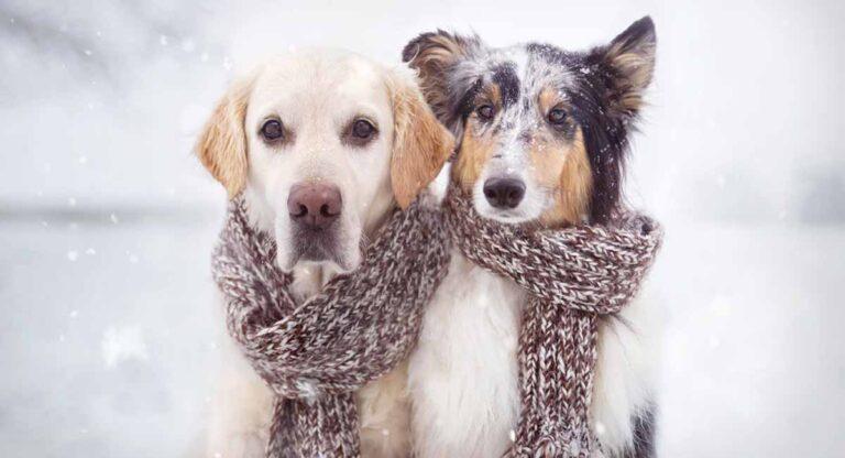 ¿Qué temperatura aguanta tu perro?