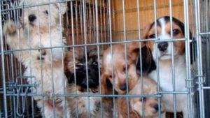Prohíben en San Antonio venta de mascotas de criaderos