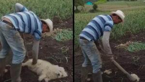 Granjero sube TikTok donde 'entierra vivo' a su perrito y causa polémica (VIDEO)