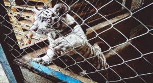 ONU apoyará a México a combatir tráfico ilegal de especies