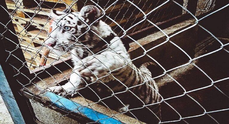 traficos ilegal de animales mexico