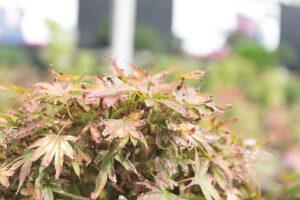 Recuperar plantas tras las heladas, es posible