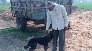Un hombre deshereda a sus hijos y deja la mitad de todo a su perro