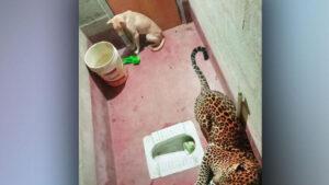 VIDEO: Encierran a un perro callejero con un leopardo en un baño