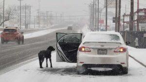 Con un paquete de tortillas rescata perro callejero durante una tormenta invernal