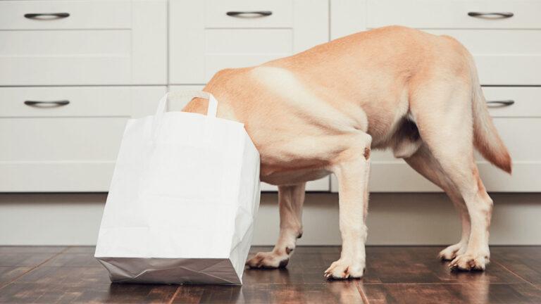 Alimento para perros, ¿Cuánta proteína es necesaria?