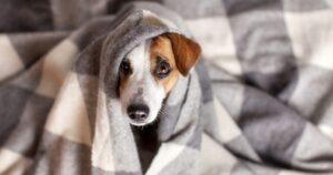 Cuida a tus mascotas del frío se prevén heladas de hasta -7°C en Nuevo Laredo