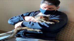 Gata extraviada hace 15 años se reencuentra con su dueño