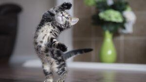 Gato rompe las redes por bailar la coreografía de Asereje -video-