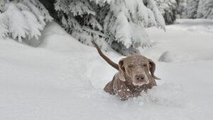 Hallan perrito congelado y muerto en Texas; llevan animales a refugios
