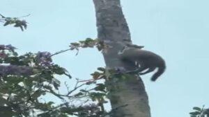 Helada dejó congelado a un gato mientras subía un árbol -vídeo-