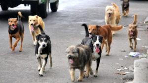México el país número uno en todo el mundo en abandono de mascotas
