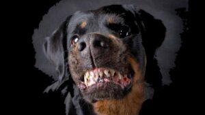 Perro ataca a dos pequeños niños mientras la madre solo grita: VIDEO
