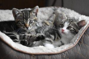 Cuidados de invierno para tu gato