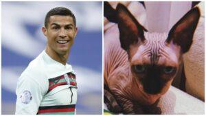 Cristiano Ronaldo: Atropellan a su gato y vuela en jet privado a veterinaria