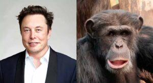 Implanta Elon Musk un chip en mono: ahora es experto en videojuegos