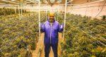 Mike Tyson gana 500 mil dólares al mes por venta legal de mariguana