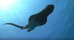 Captan a 'mini Godzilla' en las Islas Galápagos (VIDEO)