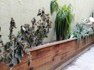 Cómo recuperar las plantas después de las intensas heladas
