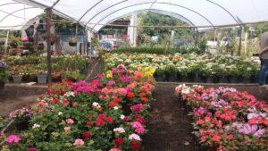 Estas son las plantas de exterior que resistentes el frío y el calor