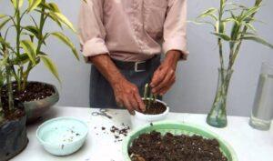 ¿Cómo proteger las plantas de las heladas? Aquí te lo decimos
